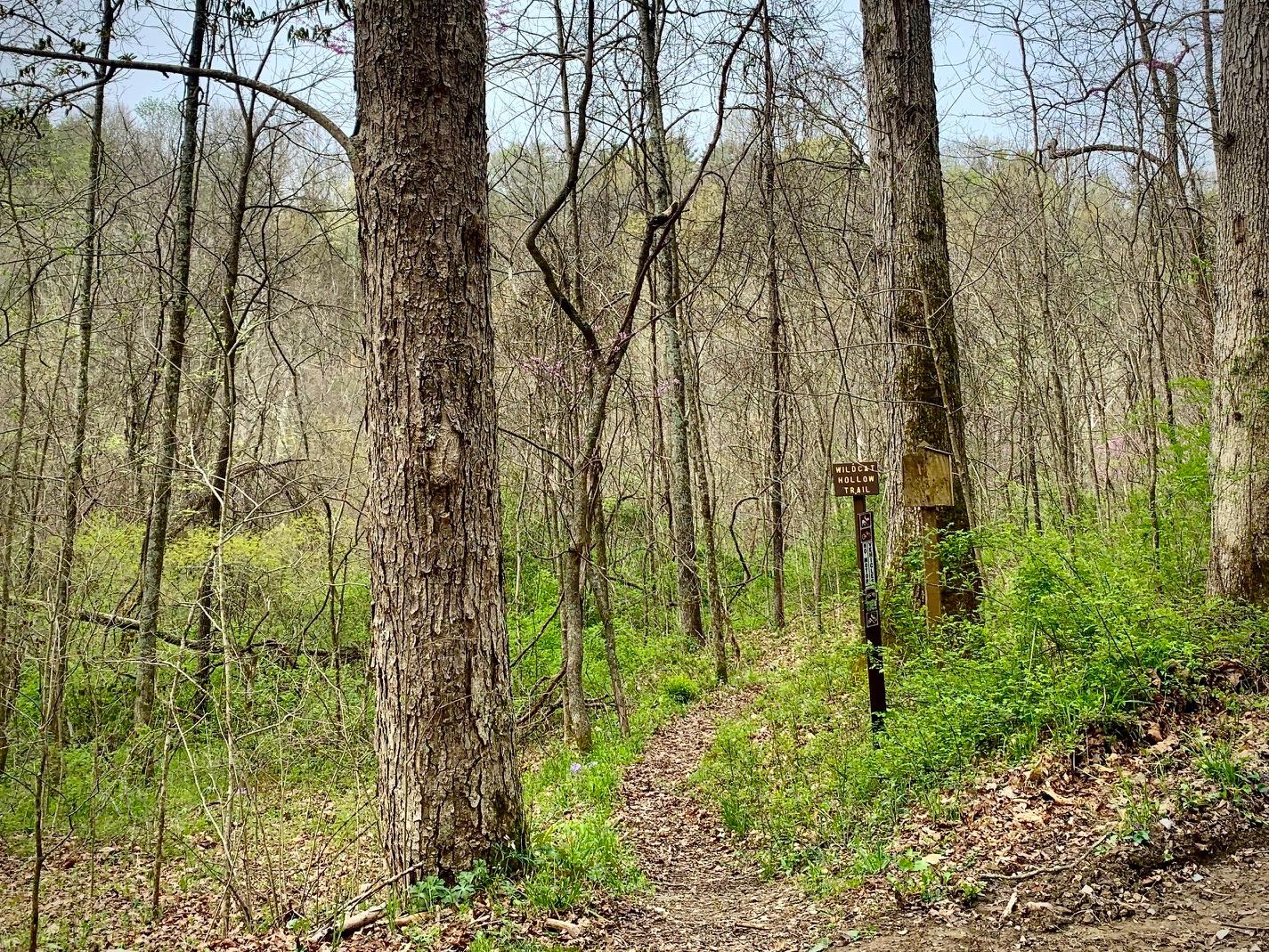 Hiking Area Near The Cabin